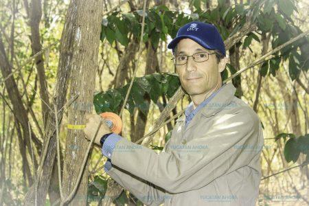 En Yucatán la selva ya no es original