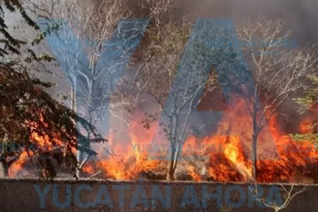 Por quemar abejas, incendian cuatro palapas de una hacienda