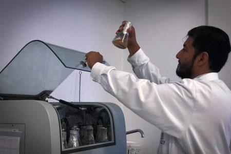 Científicos del CICY desarrollan biocombustible con semillas de ramón