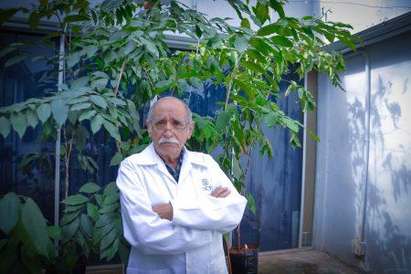 El sargazo, feo para el turismo, pero ideal para producir hongos comestibles