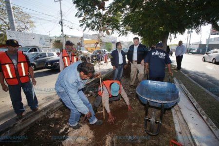 Impulsan nuevas zonas verdes en Mérida
