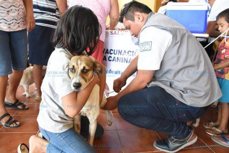 Arranca en Yucatán la Semana Nacional de Vacunación de Perros y Gatos
