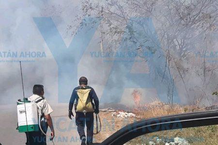 Impactante incendio de monte bajo al norte de Mérida