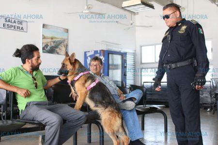 Policía de la SSP localiza y devuelve una pastor alemán