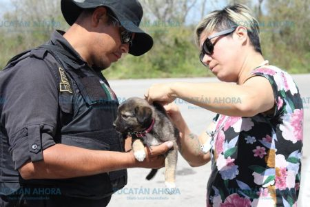 Veterinaria pasa por retén policiaco y la petición que le hacen la deja impactada