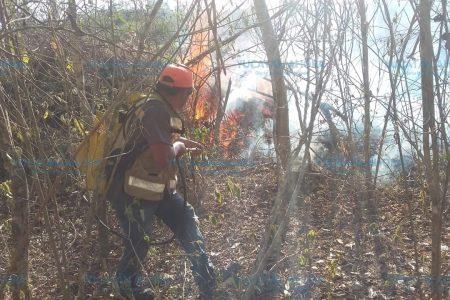 Lluvias ayudan a controlar incendios en el sur de Yucatán