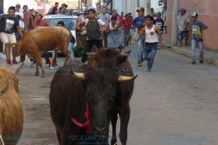 Otro evento taurino en la mira de animalistas: pamplonadas al estilo Yucatán