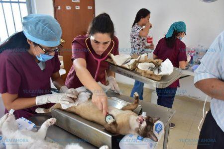 Sin pretextos para no vacunar a tu perro o gato contra la rabia