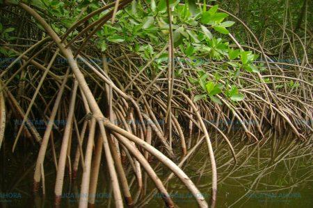 La conservación de humedales, vital para Yucatán