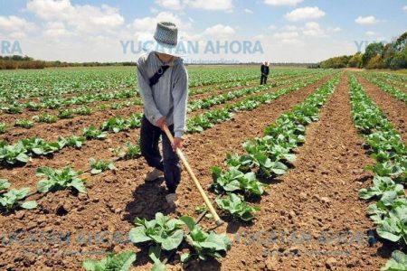 Agricultura orgánica de última generación, una nueva forma de producir