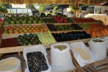 Decae la producción agrícola de Yucatán