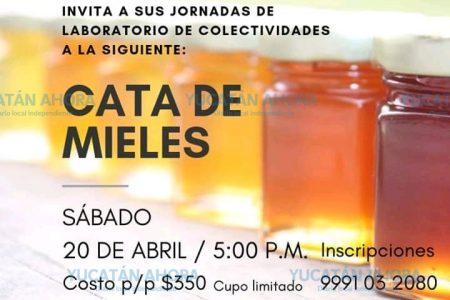 La miel de Yucatán es tan cotizada que hasta hacen catas