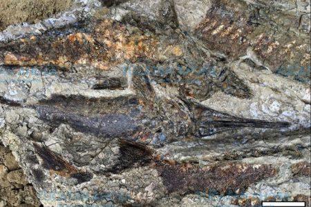 Encuentran primeros fósiles por impacto de un meteorito en Chicxulub