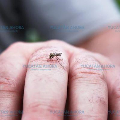 Detectan primer caso de dengue del año, en Progreso