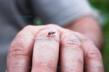 El dengue llega a Mérida: primer caso de 2019