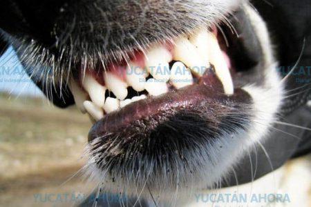 Yucatán, entre los 10 estados con más personas atacadas por perros