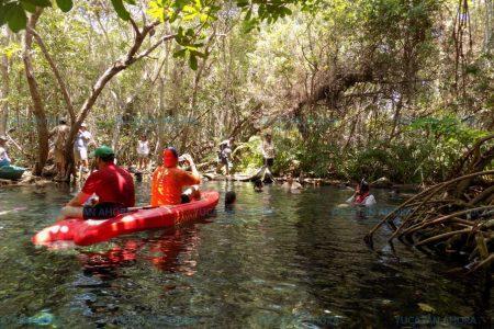 Cambio climático mata de sed la fauna silvestre de Yucatán