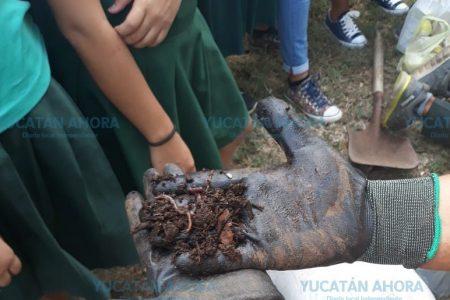 Con lombrices, universitarios salvan a Tixkokob de la basura