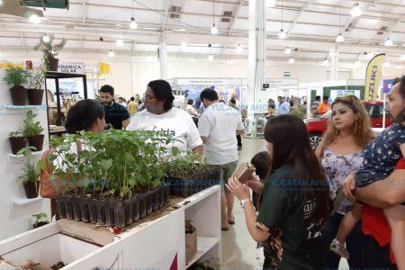 Gran interés para participar en la Cruzada Forestal 2019