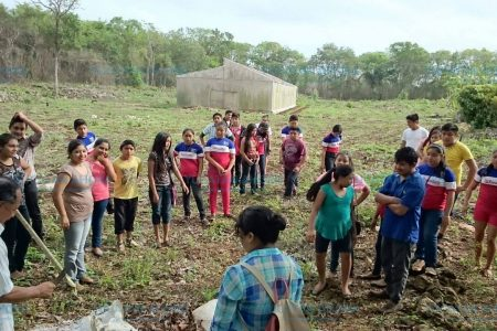 Científicos yucatecos, al rescate de la milpa maya