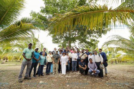 Luchan contra plaga que dejó sin cocoteros la costa de Yucatán
