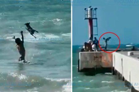 Intenta ahogar un perro en el mar