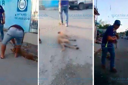 Cruel asesinato de un perro en Kanasín
