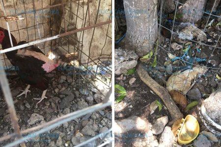 En Kanasín queda impune el maltrato animal: activistas