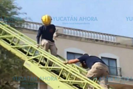 Bomberos de la SSP rescatan un gato en zona hotelera de Mérida