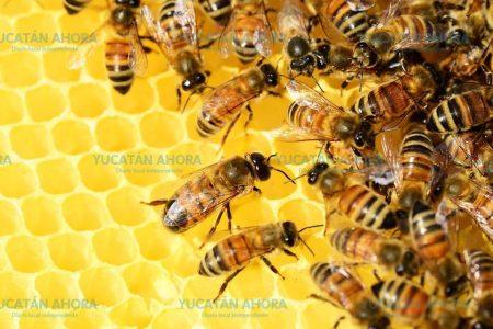 Estudiantes yucatecos inventan detector de miel adulterada