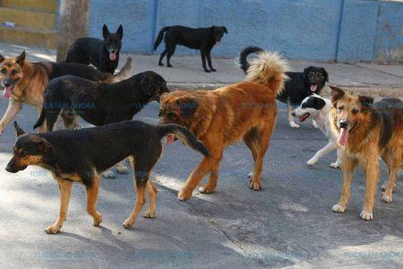 Dueños irresponsables, principal causa de la proliferación de perros callejeros