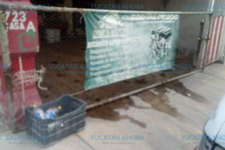 Denuncian predio insalubre por exceso de perros en Piedra de Agua