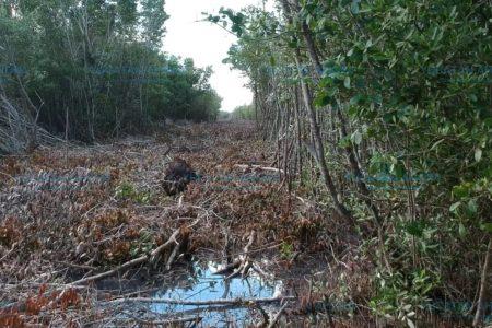 Destruyen manglar en reserva ecológica y nadie los castiga