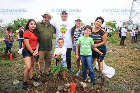 Inicia la siembra masiva de árboles en Mérida