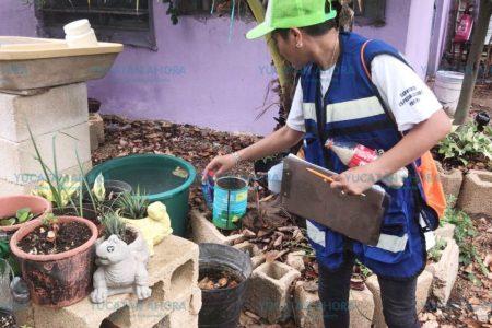 Combate al mosco en colonias y comisarías de Mérida