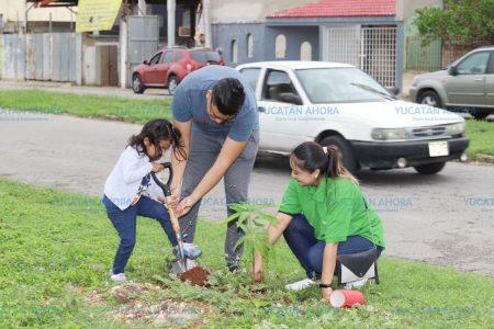 Avanza la nueva arborización de Mérida