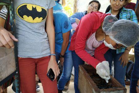 Estudiantes yucatecos vuelven al campo