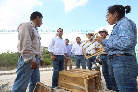 Yucatán ya produce sus propias abejas reinas