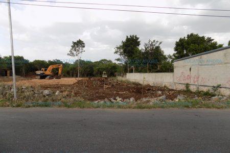 Impune la tala de centenario árbol en el sur de Mérida