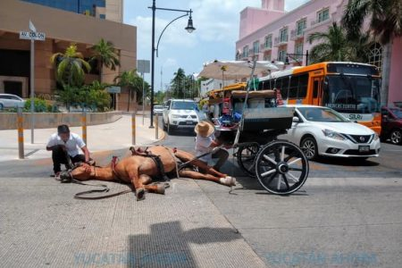 Volquete asusta y hace caer a un caballo calesero