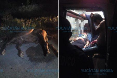 Taxi choca contra un caballo: los pasajeros se lesionan y el equino muere