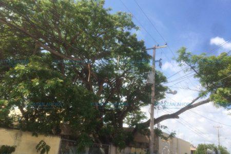 Mulchechén y otras zonas de Kanasín, sin luz desde hace tres horas