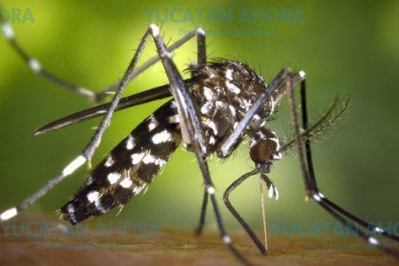El dengue, bajo control en Yucatán; en Quintana Roo sigue golpeando