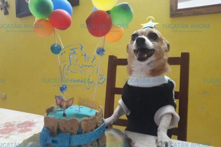 Tener 'perrijos', costumbre que se arraiga en Yucatán