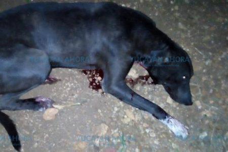 Acusan a hijo de ex alcaldesa priista de matar a indefenso perro