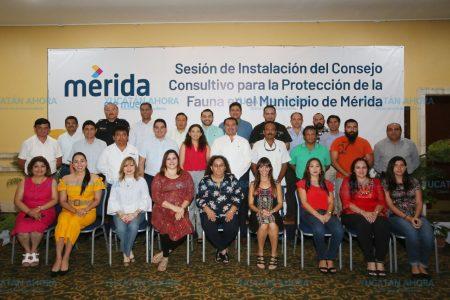 Mérida tendrá un hospital veterinario público