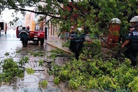 Cae un árbol en la céntrica iglesia de Santa Lucía
