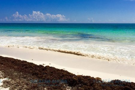 Ven remota la posibilidad de que Yucatán se 'ahogue' en sargazo