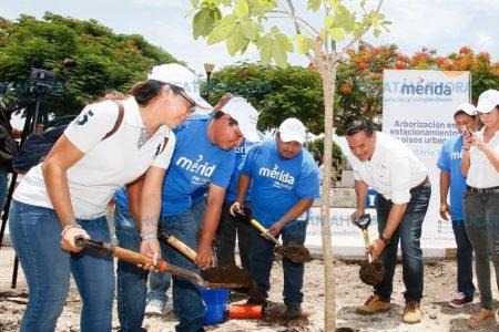 Renán Barrera encabeza reforestación de planchas de cemento