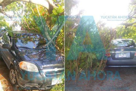 Cae otro árbol encima de un auto